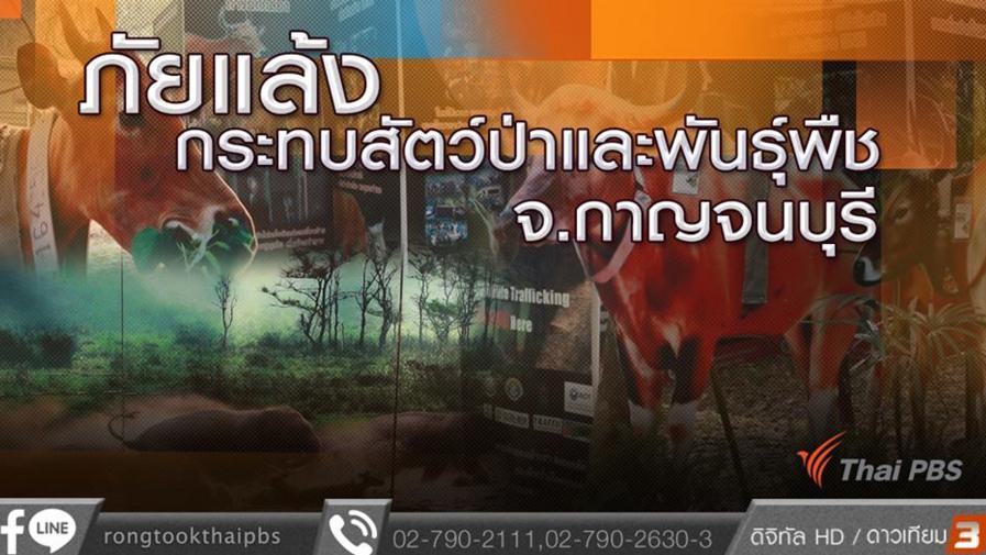 ร้องทุก(ข์) ลงป้ายนี้ - ภัยแล้งกระทบสัตว์ป่าและพันธุ์พืช จ.กาญจนบุรี