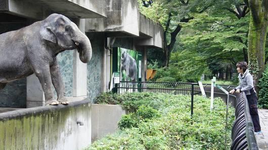 ดูให้รู้ - ฮานาโกะ ช้างไทยเชื่อมสัมพันธ์