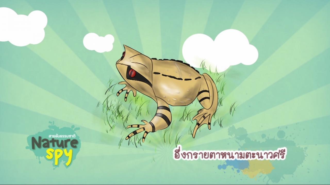 Nature Spy สายลับธรรมชาติ - เมโลเด