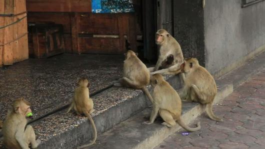 ชีวิตจริงยิ่งกว่าละคร - แม่พระของลิงไร้บ้าน