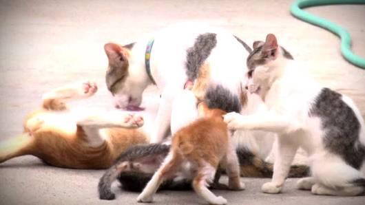 ชีวิตจริงยิ่งกว่าละคร - คนจน แมวจร