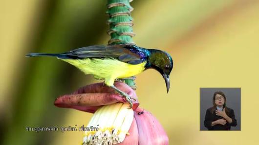 เปิดบ้าน Thai PBS - แรงบันดาลใจจากโครงการ Save The Birds