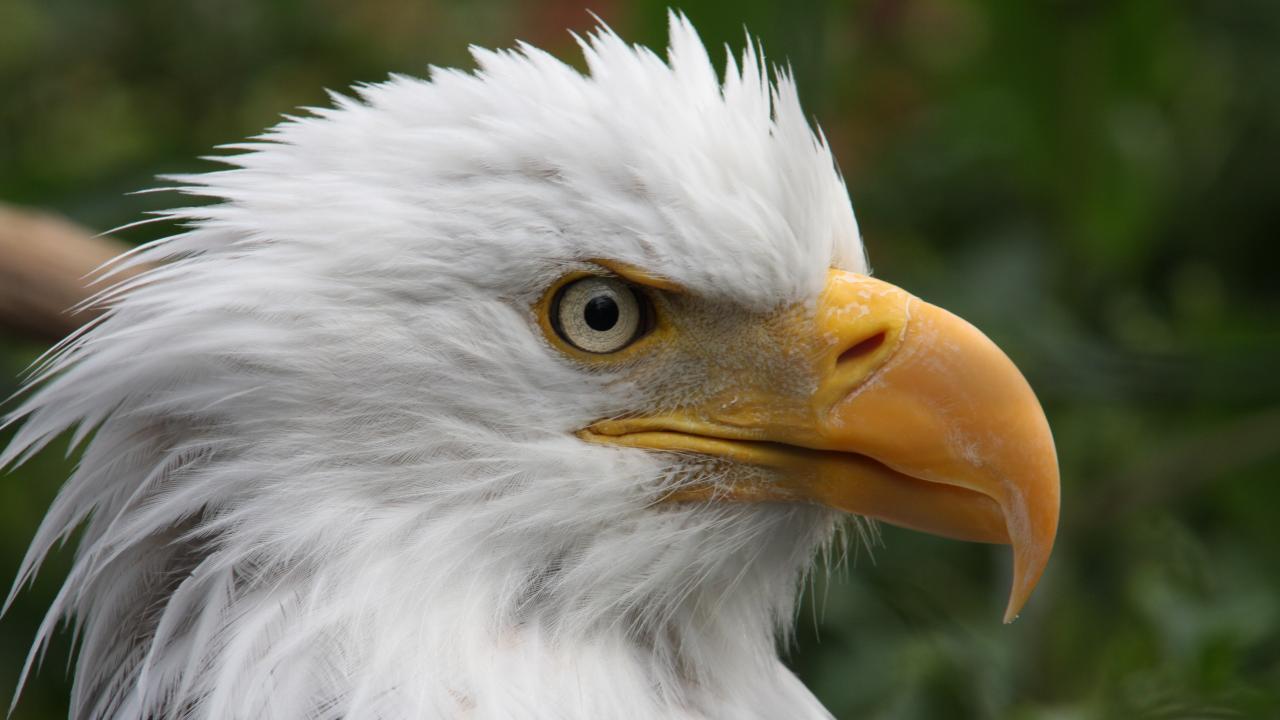 เปิดโลกสัตว์หรรษา - ผิวหนัง ขน และขนนก