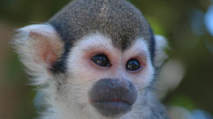 เปิดโลกสัตว์หรรษา - ชีวิตซิมแปนซี