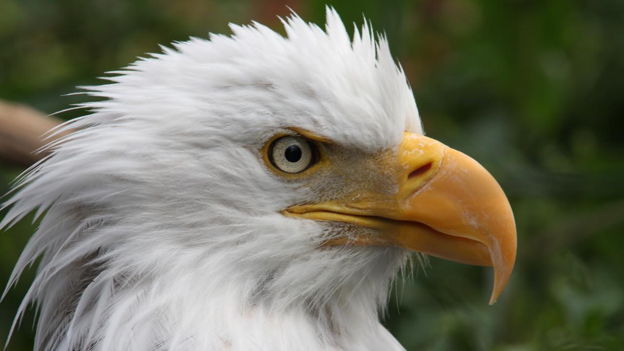 เปิดโลกสัตว์หรรษา - นกล่าเหยื่อ