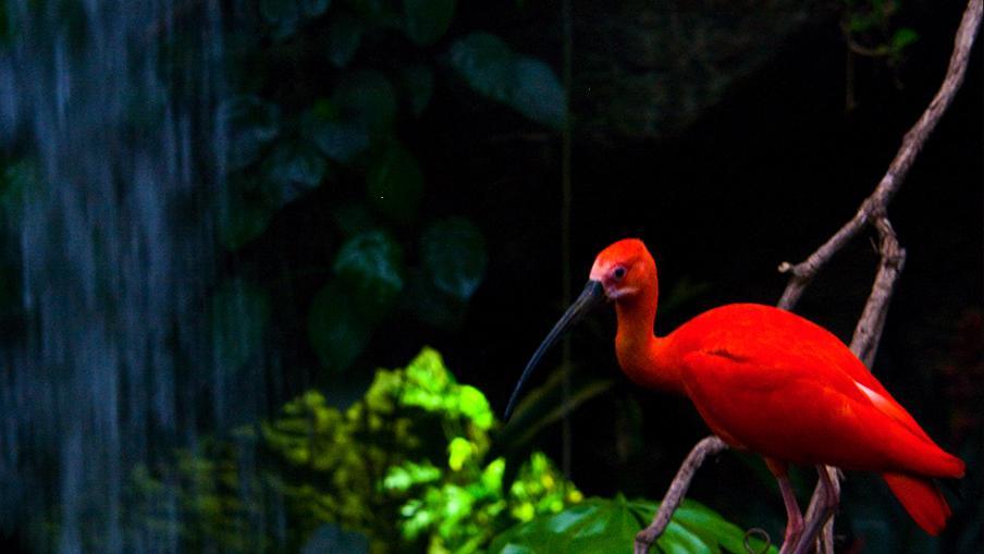 เปิดโลกสัตว์หรรษา - ปีก