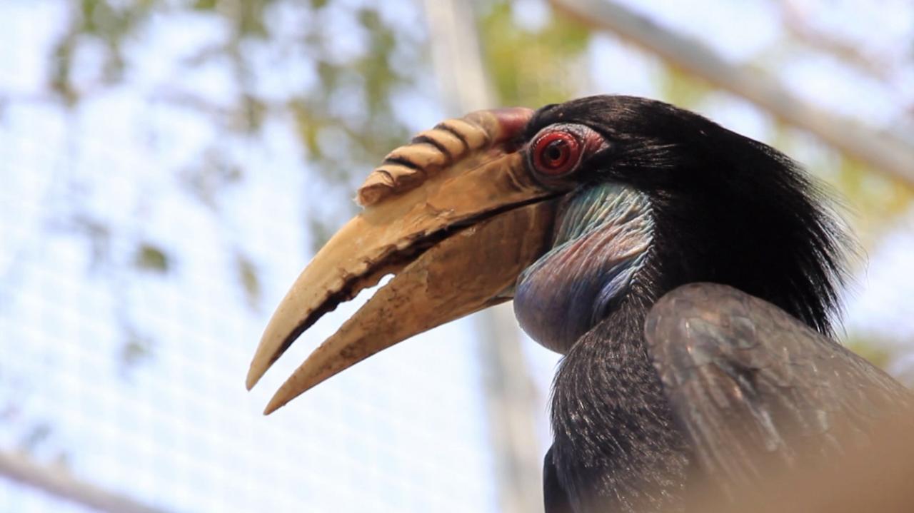 Nature Spy สายลับธรรมชาติ - นกเงือกแห่งเทือกเขา