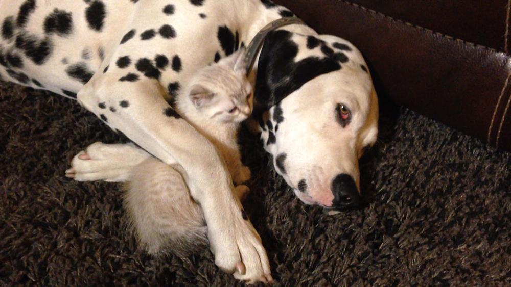 มิติโลกหลังเที่ยงคืน - เพื่อนซี้ต่างสายพันธุ์ ตอน ปัปปีเลิฟลูกหมากับลูกชีตาห์