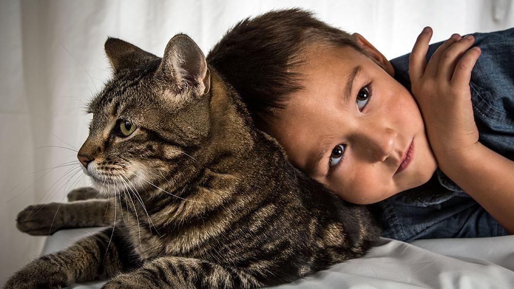 มิติโลกหลังเที่ยงคืน - เพื่อนซี้ต่างสายพันธุ์ ตอน แมววีรบุรุษ