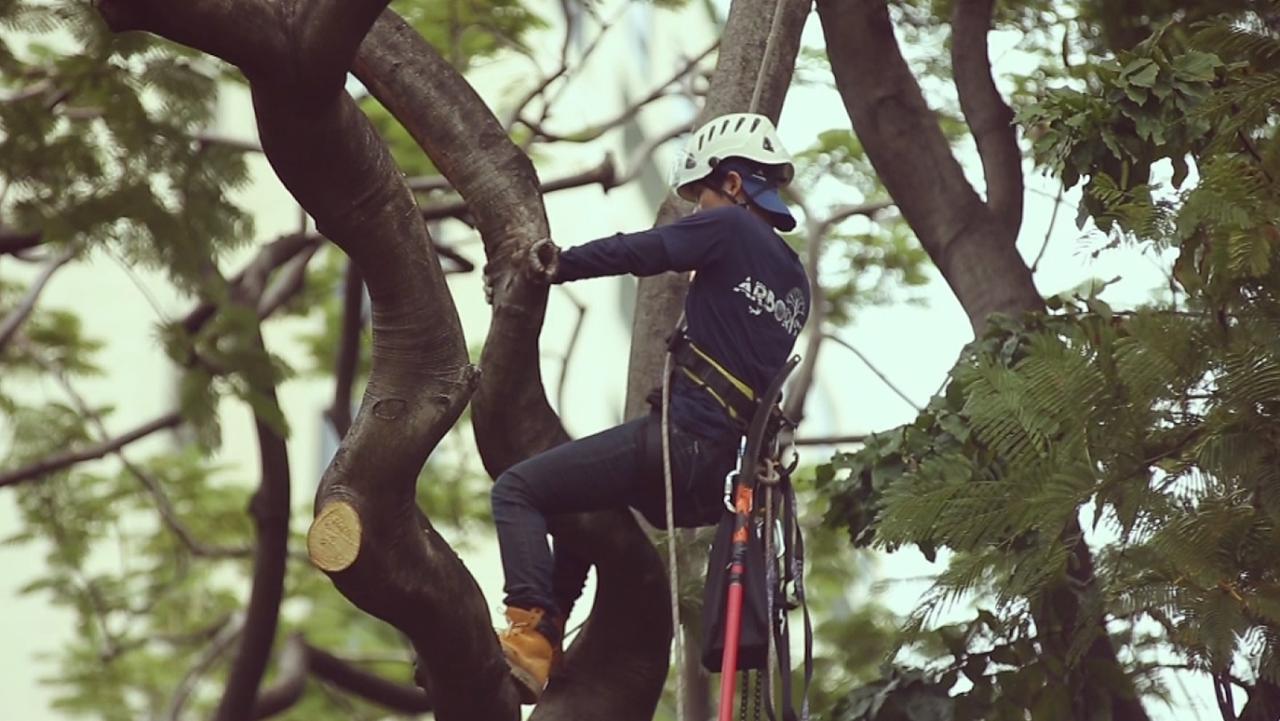 ทีวีชุมชน - รุกขกร หมอต้นไม้
