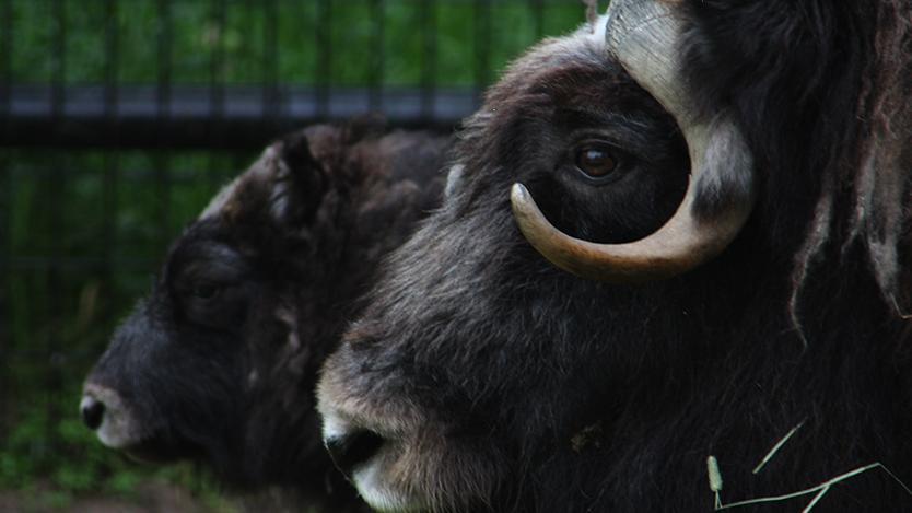เปิดโลกสัตว์หรรษา - สัตว์ในฟาร์ม