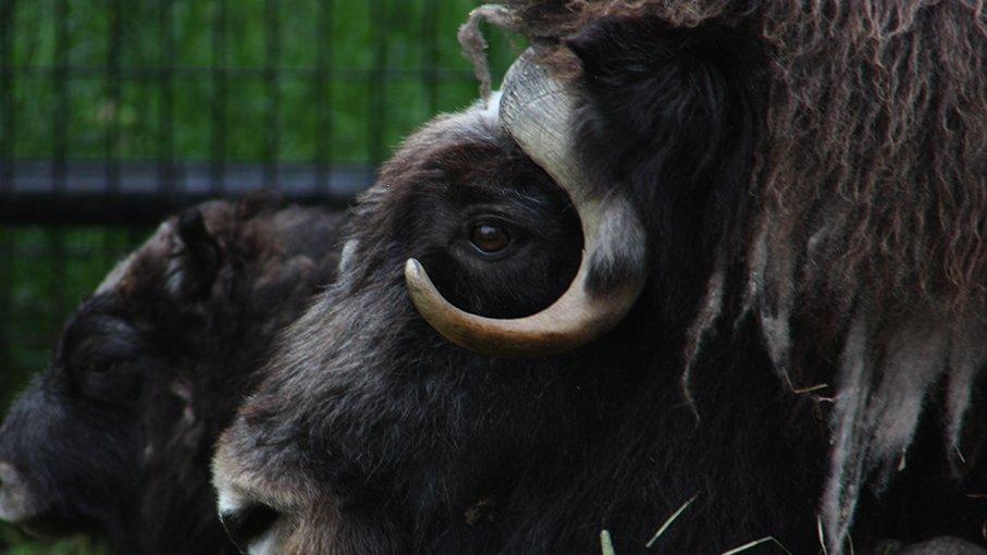 เปิดโลกสัตว์หรรษา - ที่มาของสวนสัตว์
