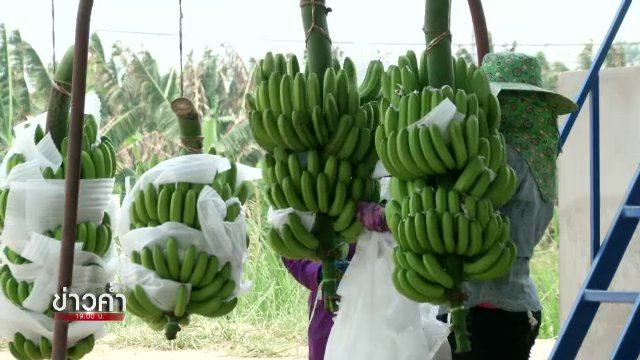 วาระประเทศไทย - กล้วยหอมจีนบนแผ่นดินไทย ใครได้-ใครเสีย