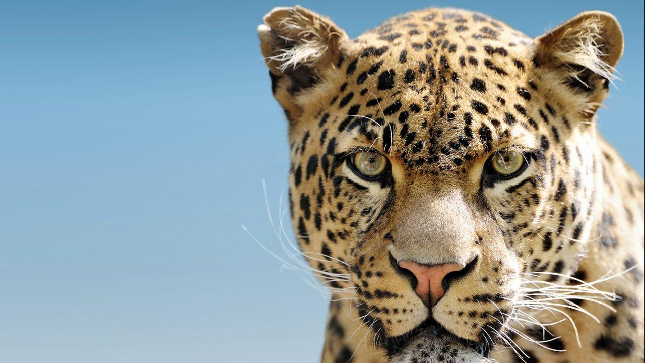 ท่องโลกกว้าง - วิวัฒนาการเสือในอนาคต