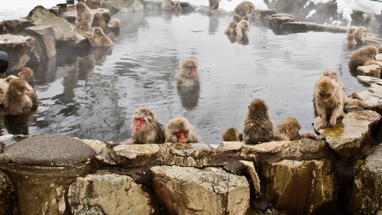 ท่องโลกกว้าง - ป่าธรรมชาติญี่ปุ่นในรอบปี