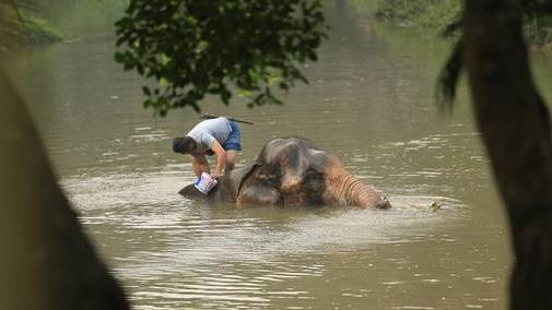 เที่ยวไทยไม่ตกยุค - วิถีควาญ วิถีช้าง จังหวัดลำปาง