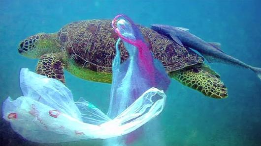 Animals Speak - ชีวิตอิสระของเต่าทะเล