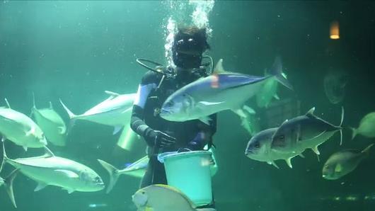 Animals Speak - เรียนรู้...โลกใต้น้ำ