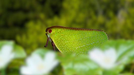 TataTitiToto ไดโนมหัศจรรย์ - แมลงล้อเลียน