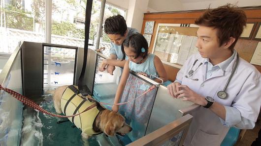Animals Speak - กายภาพเจ้าตูบหลังผ่าตัด