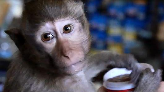 Animals Speak - นครลิง...ชีวิตที่ไม่ลับ 1