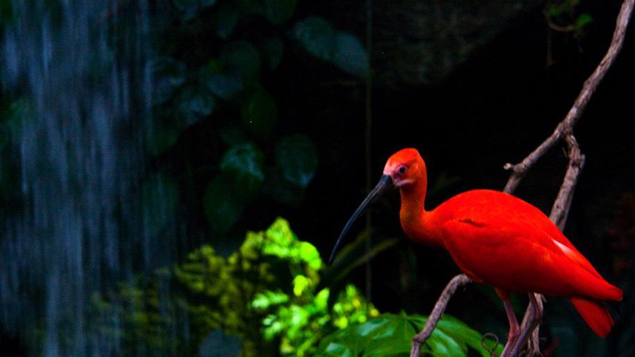 เปิดโลกสัตว์หรรษา - ตัวลีเมอร์คืออะไร