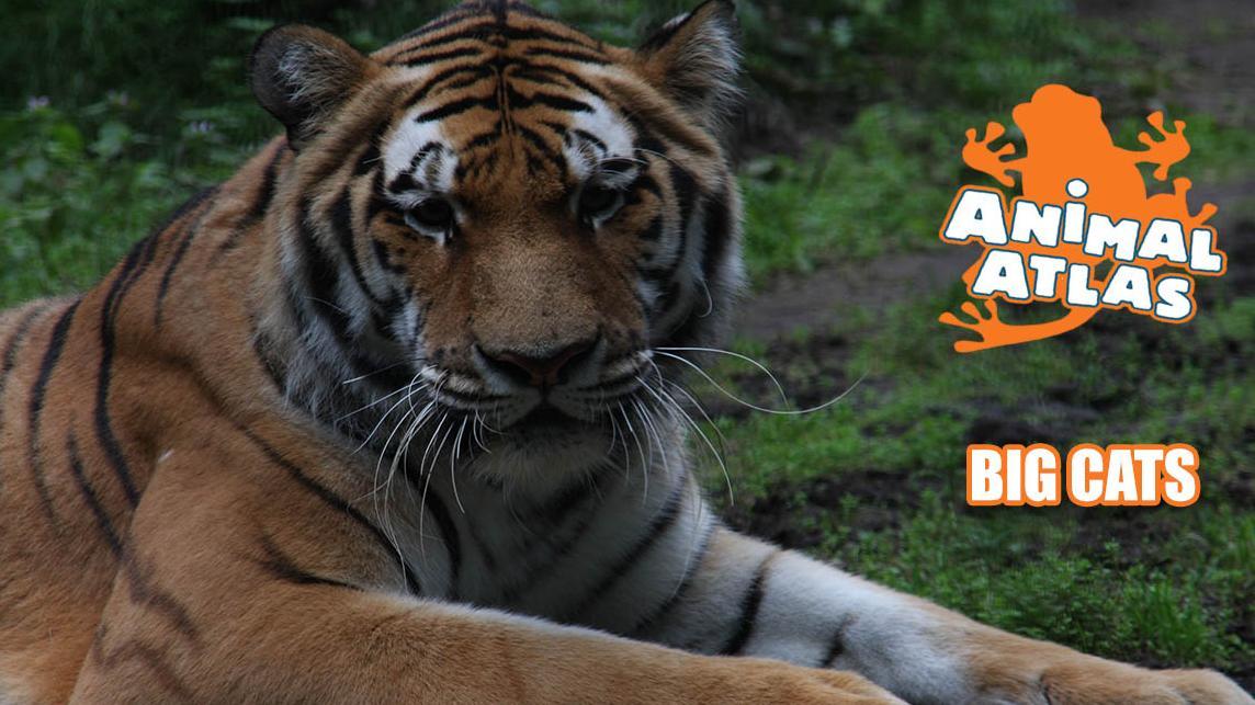 เปิดโลกสัตว์หรรษา - หนังสือเดินทางสู่สัตว์แอฟริกา