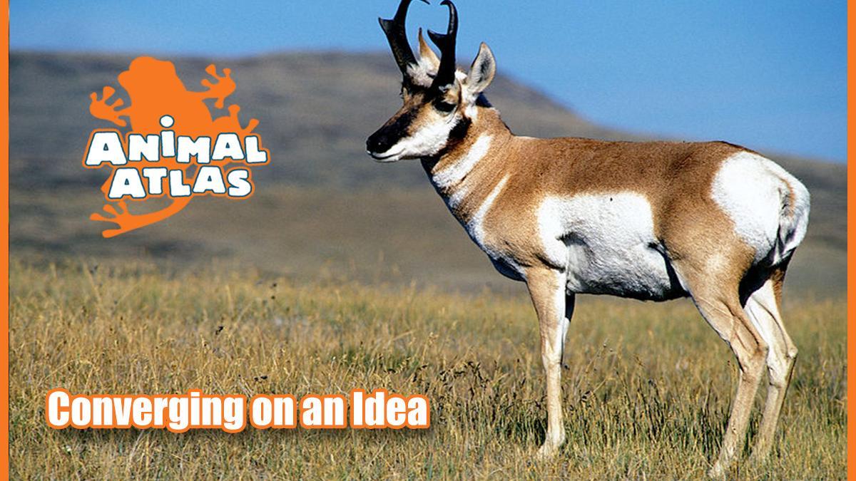 เปิดโลกสัตว์หรรษา - การเอาตัวรอด