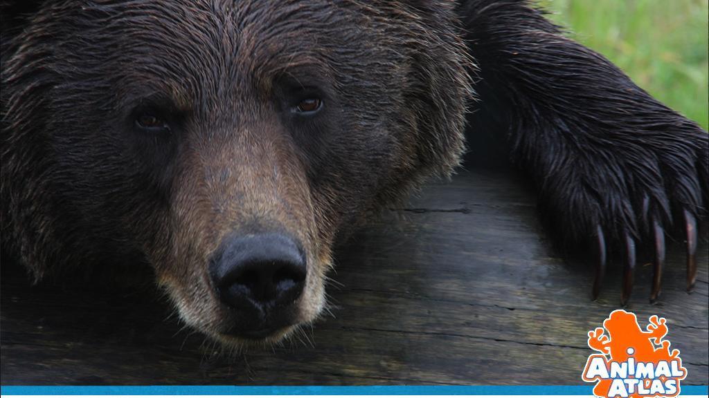 เปิดโลกสัตว์หรรษา - หมี