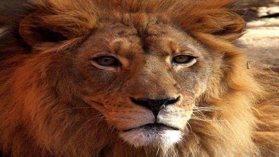 เปิดโลกสัตว์หรรษา - หนังสือเดินทางสู่สัตว์เอเชีย