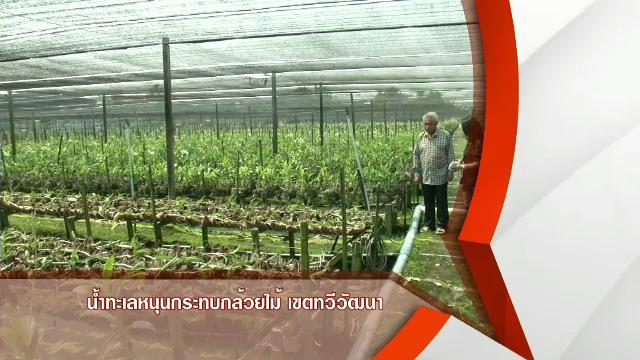 สถานีประชาชน - น้ำทะเลหนุนกระทบสวนกล้วยไม้ เขตทวีวัฒนา กทม.