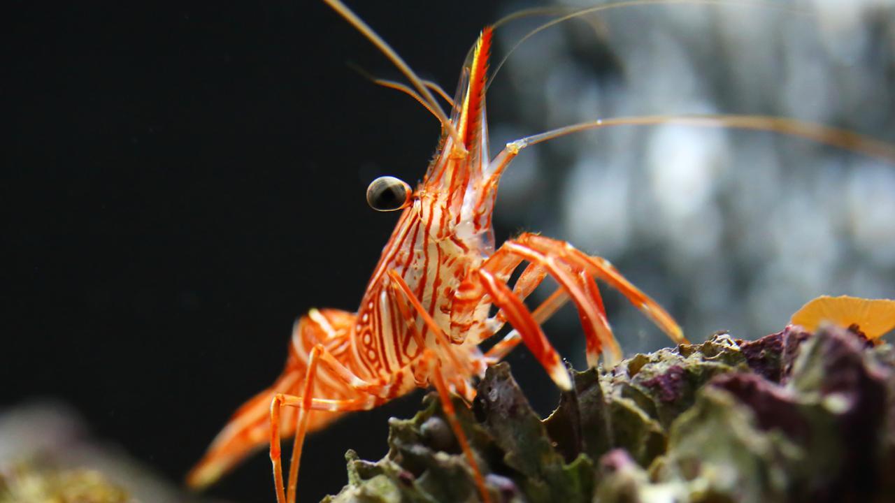ท่องโลกสุดสัปดาห์ - เพื่อนผู้พิทักษ์ความสะอาดและนักล่าใต้ทะเล