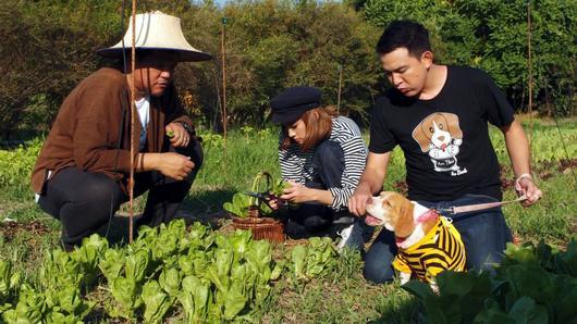 Foodwork - สวนเกษตรอินทรีย์