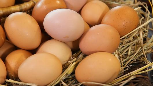 กินอยู่...คือ - เรื่องของไข่ไก่