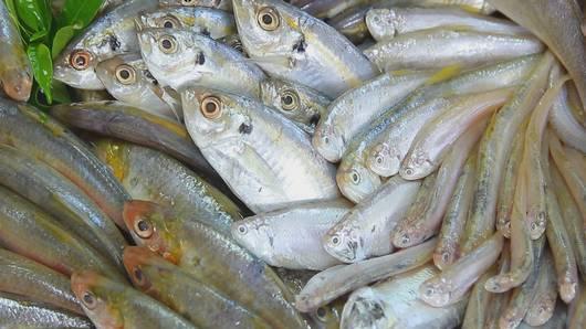 กินอยู่...คือ - ปลาหน้าแปลก