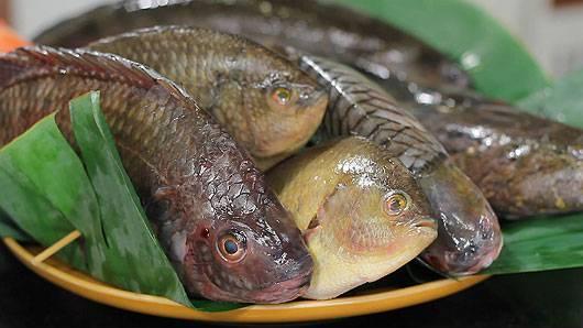 กินอยู่...คือ - ปลาน้ำจืดจากธรรมชาติ