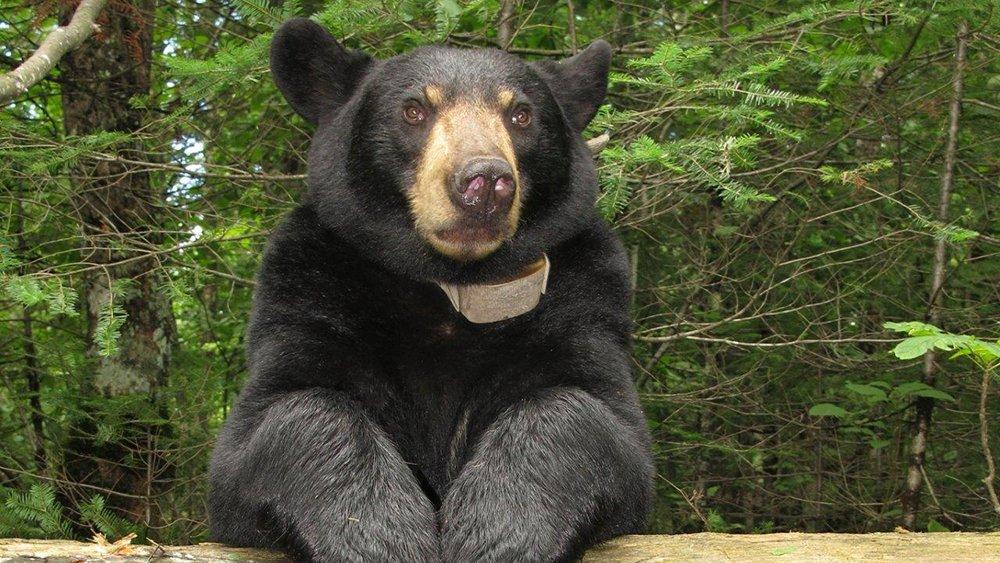 มิติโลกหลังเที่ยงคืน - ตามติดชีวิตเจ้าหมีลิลลี่