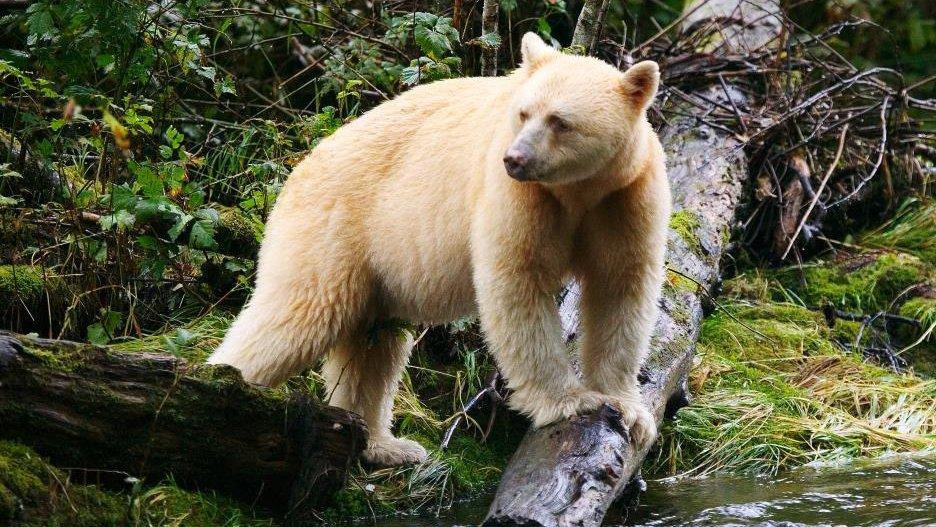 ท่องโลกกว้าง - การออกค้นหาหมีลึกลับ