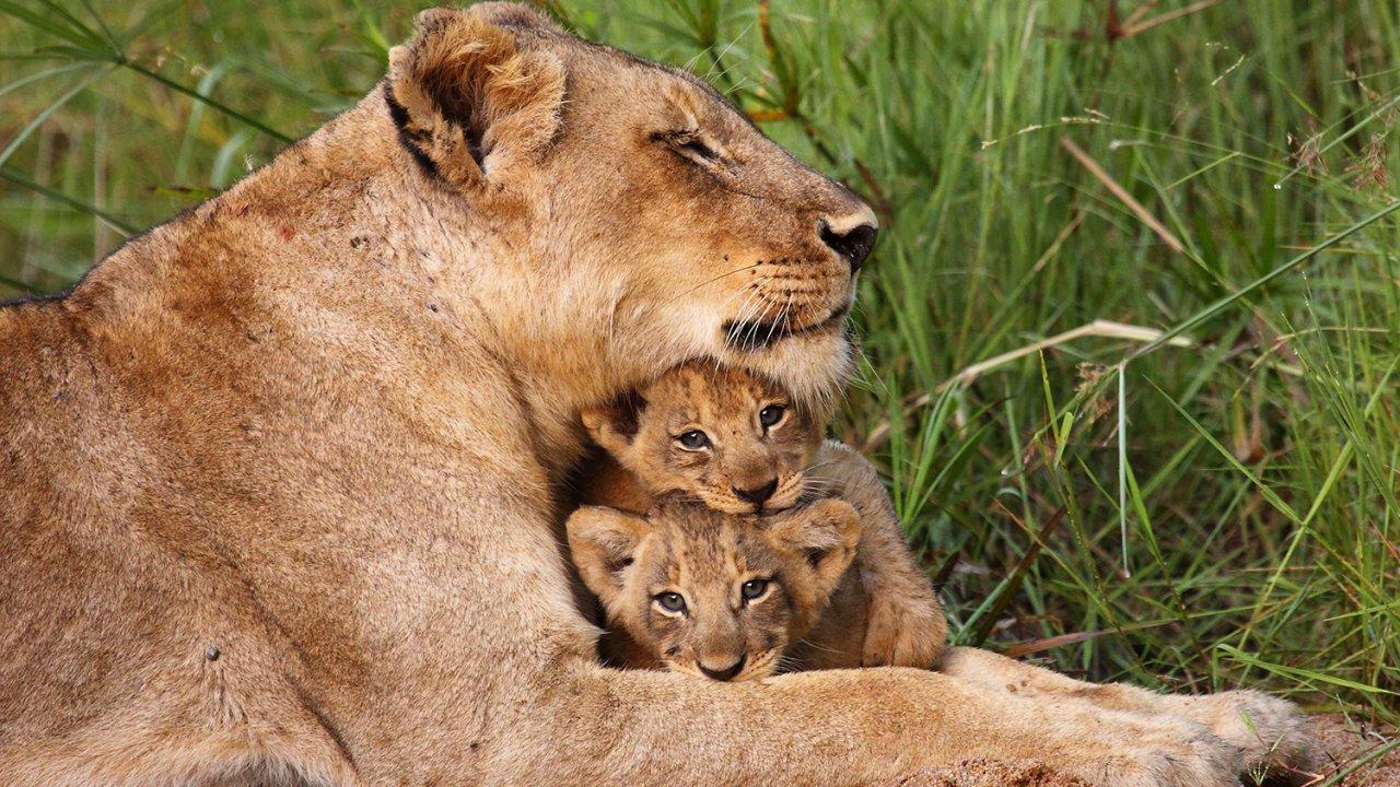 ท่องโลกกว้าง - สุดยอดพ่อแม่สัตว์โลก ตอน ร่วมด้วยช่วยกัน