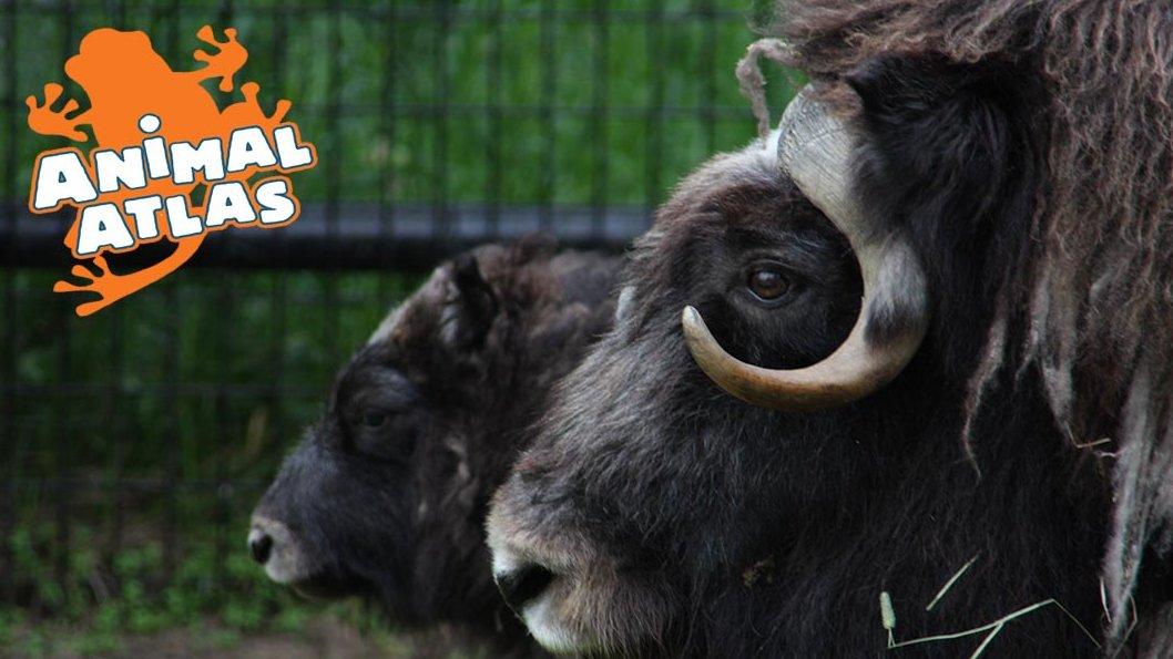 เปิดโลกสัตว์หรรษา - การเคี้ยวอาหารเป็นเรื่องใหญ่นะ