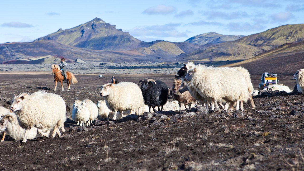 ท่องโลกกว้าง - โลก 360 องศา ตอน เลี้ยงแกะในไอซ์แลนด์