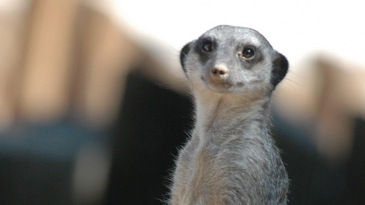 เปิดโลกสัตว์หรรษา - ค้างคาวในหอระฆัง