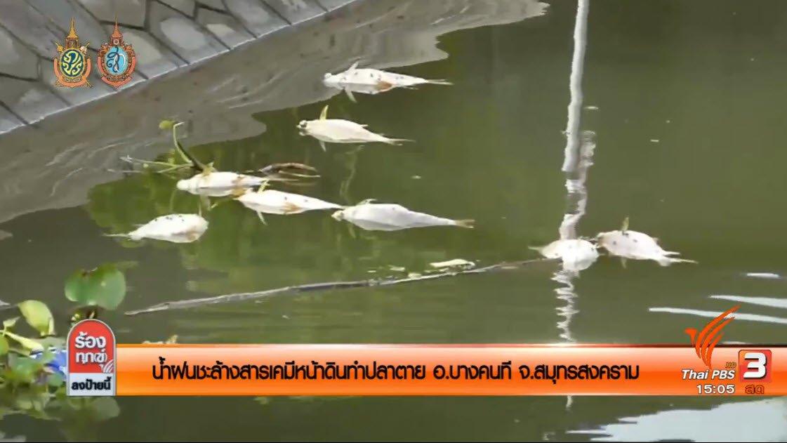 ร้องทุก(ข์) ลงป้ายนี้ - น้ำฝนชะล้างสารเคมีหน้าดินทำปลาตาย อ.บางคนที จ.สมุทรสงคราม