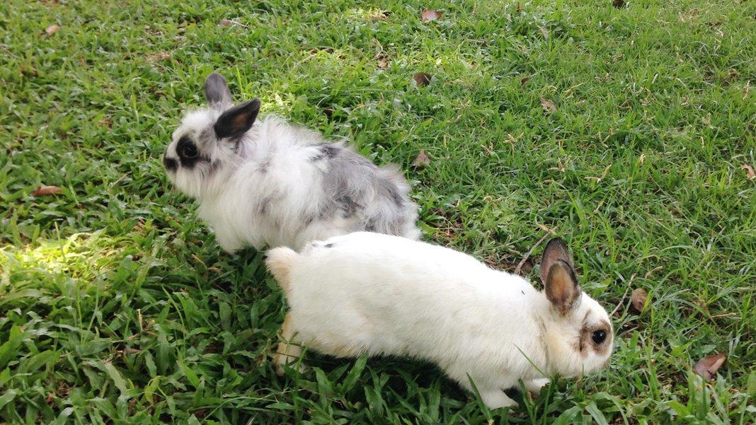 Animals Speak - กระต่ายกับเต่า ใครวิ่งไวกว่ากัน?