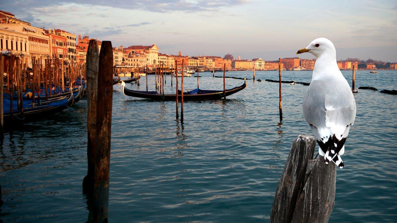 ท่องโลกกว้าง - มหัศจรรย์ธรรมชาติเวนิส