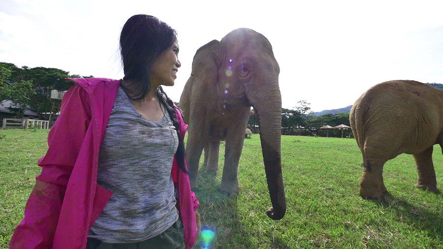 สามัญชนคนไทย - คนกับช้าง
