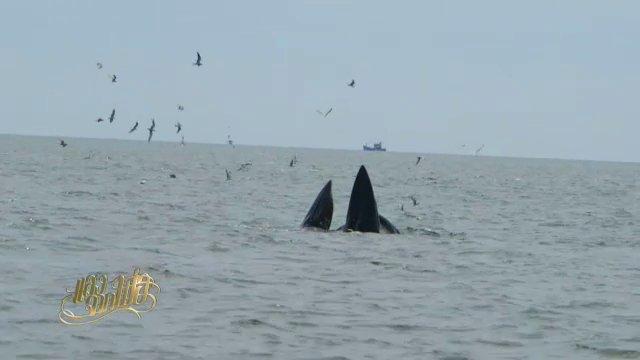 แสงจากพ่อ - วาฬบรูด้ากับแหลมผักเบี้ย