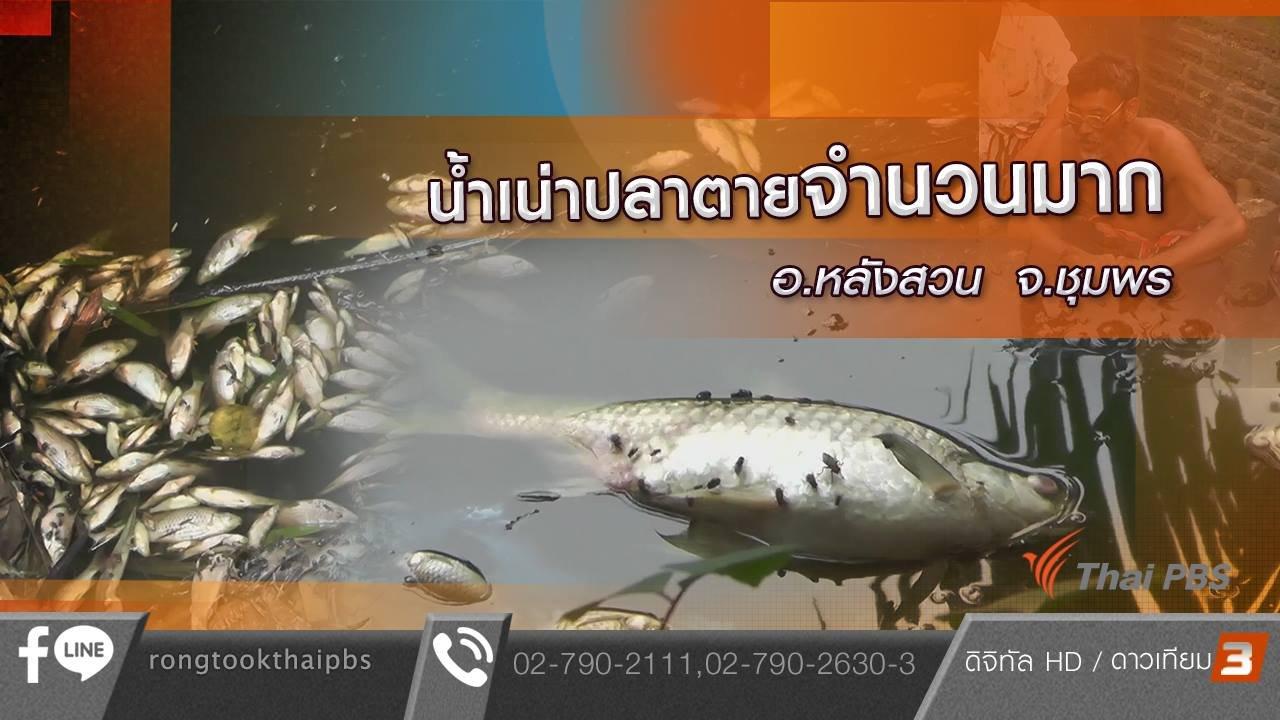 ร้องทุก(ข์) ลงป้ายนี้ - น้ำเน่าปลาตายจำนวนมาก อ.หลังสวน จ.ชุมพร