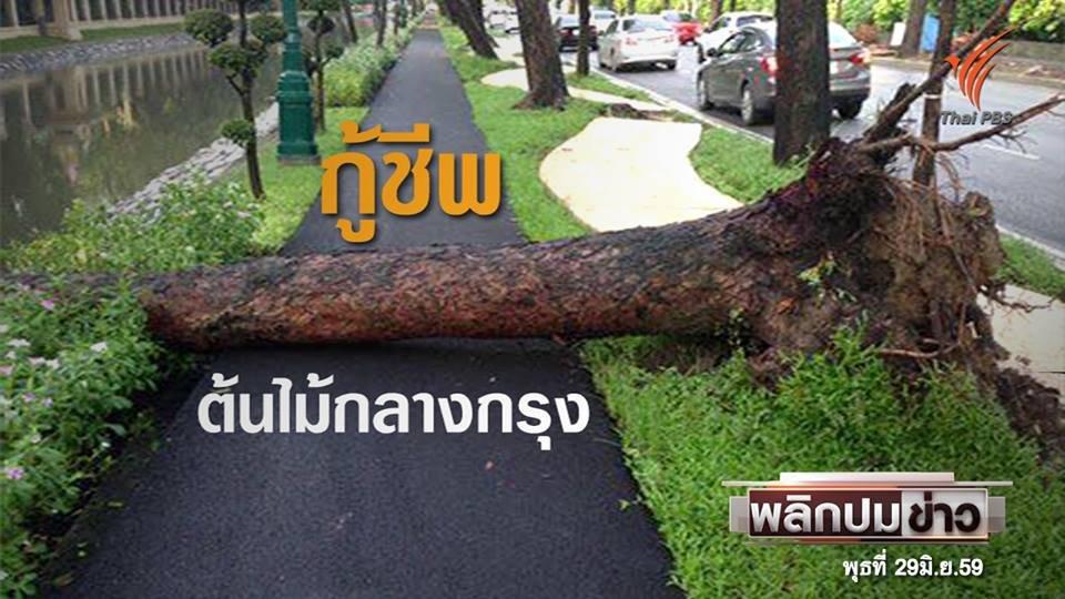 พลิกปมข่าว - กู้ชีพ ต้นไม้กลางกรุง