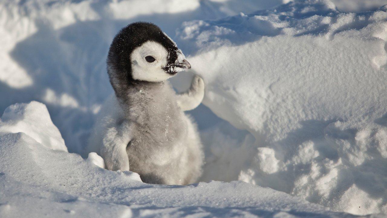 ท่องโลกกว้าง - เพนกวินน้อยนักสู้